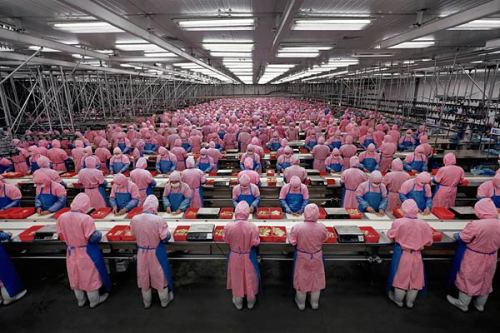 chinese-chicken-factory